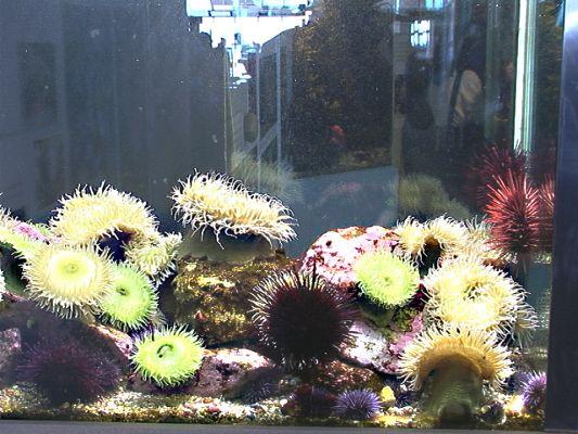 anemones5