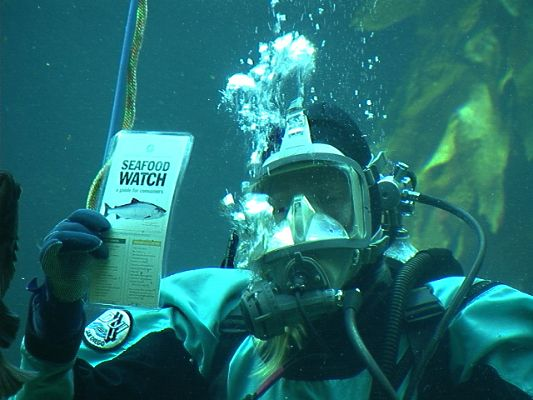fishdiver3