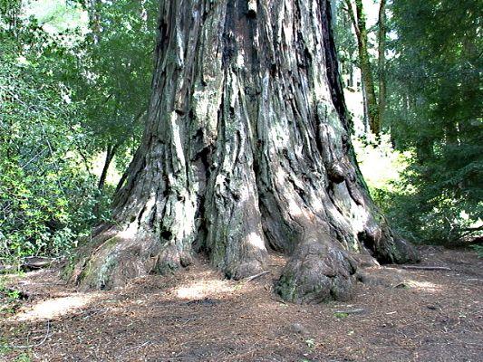 treebase2