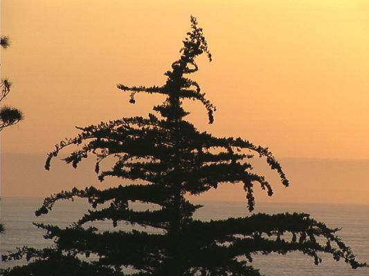 treeset1
